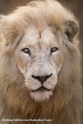 The white lion as symbol of the archetype of the self